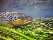 What attracts me to Tenkara by Kevin Fricke A Guest Post